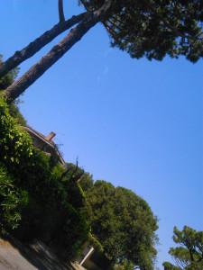 Pineta monumentale fregene e cielo azzurro